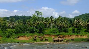 srilanka pinnawala